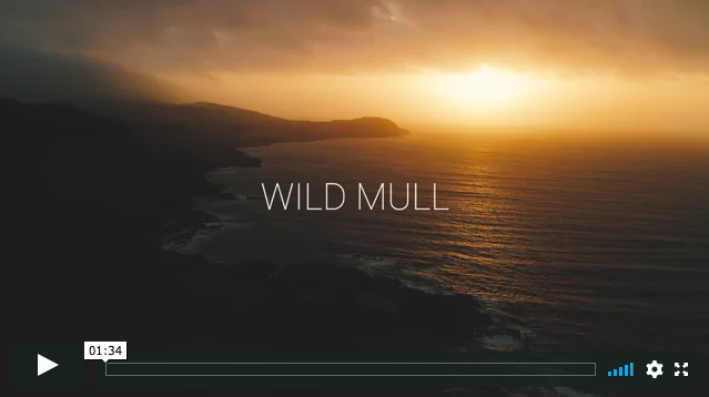 Image for Wild Mull wildlife filmmaking course