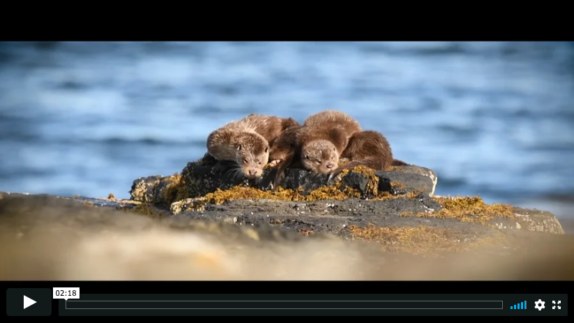 a clip from Adam's Wildlife Filmmaking Course on Mull